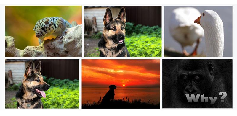 preguntas sobre los seguros para animales o mascotas
